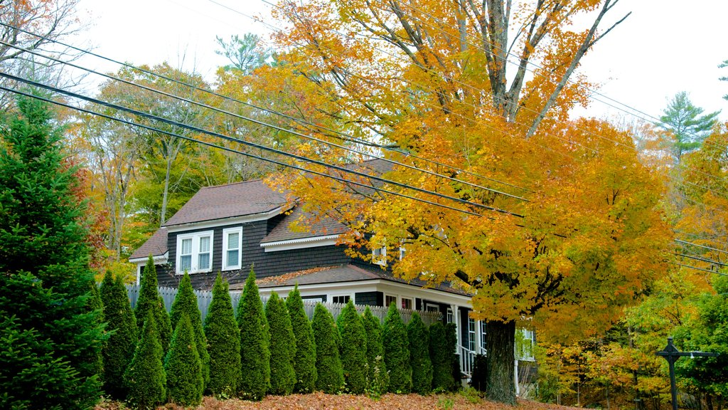 North Conway which includes a house and autumn leaves