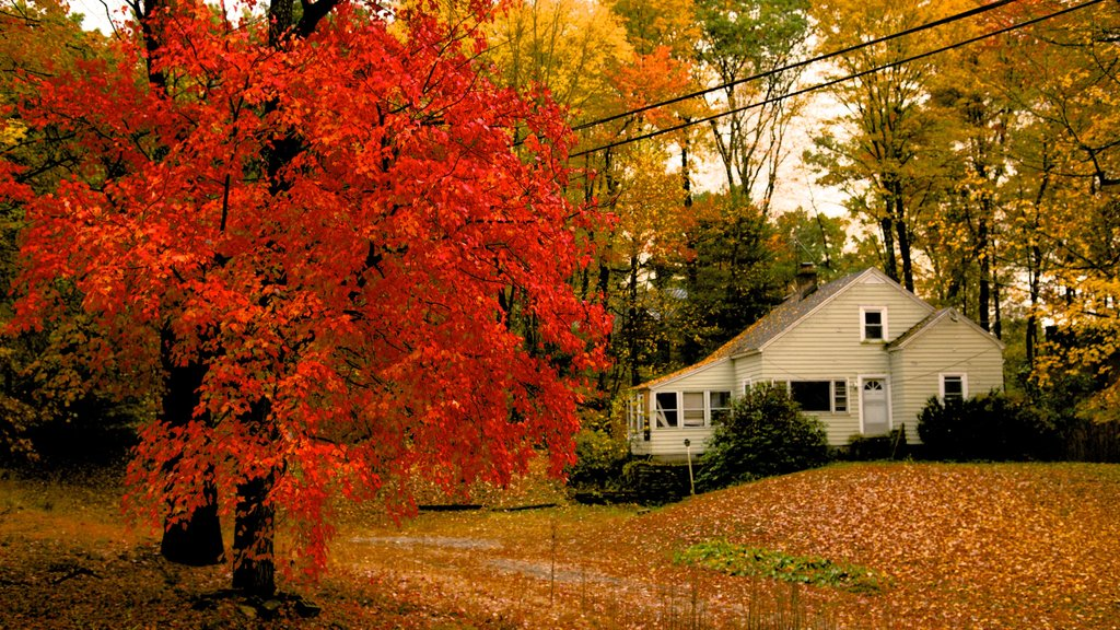 Massachusetts showing autumn leaves and a house