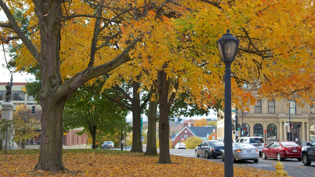 Pittsfield showing autumn leaves