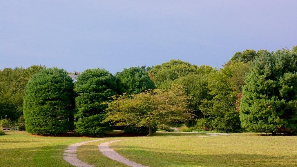 Stonington showing a park