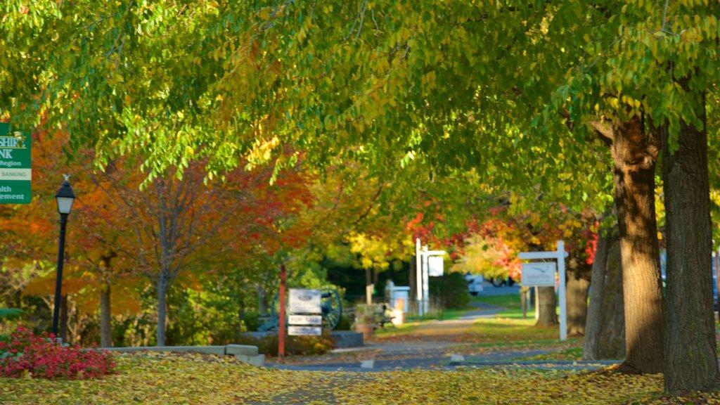 Lenox featuring autumn leaves