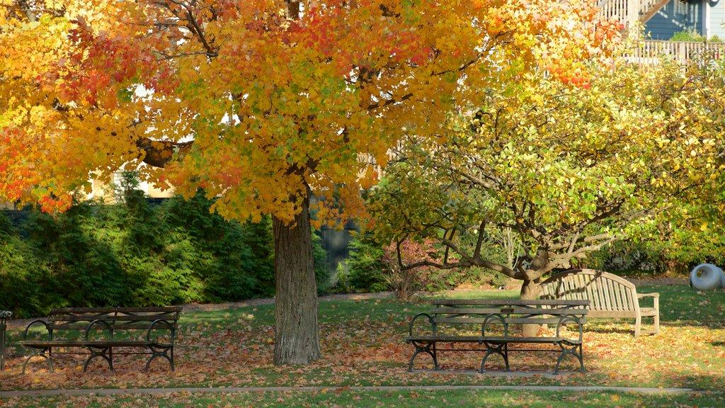 Lenox showing fall colors