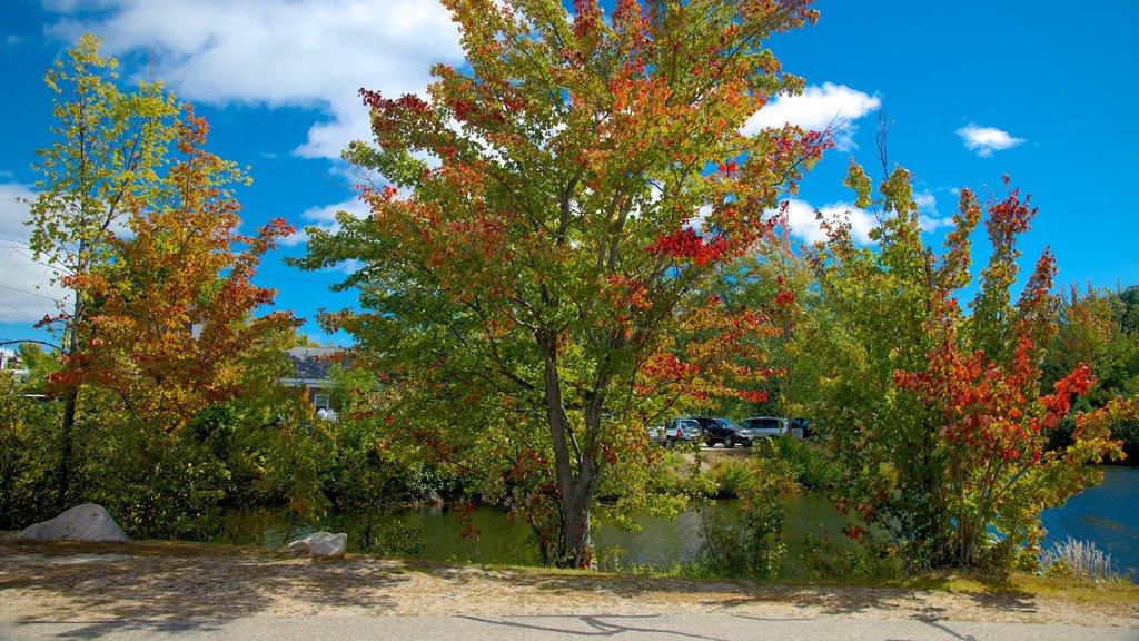 Conway ofreciendo los colores del otoño y un río o arroyo