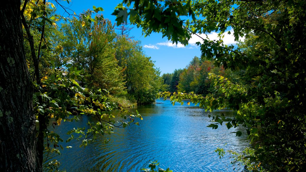Conway que incluye un río o arroyo