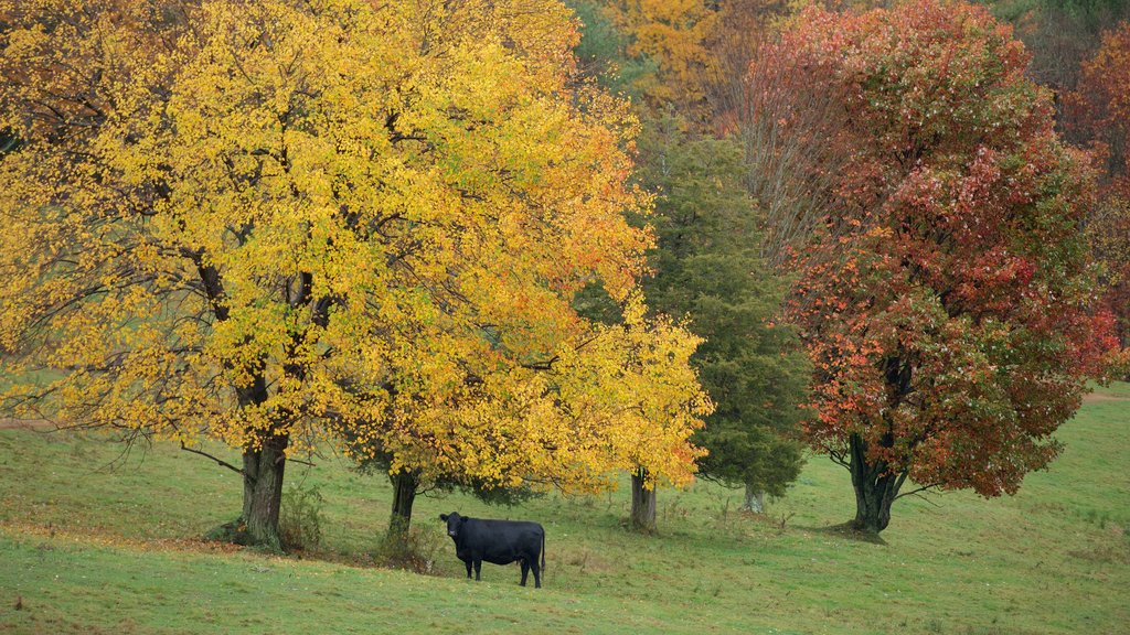 Chesterfield showing land animals and autumn leaves