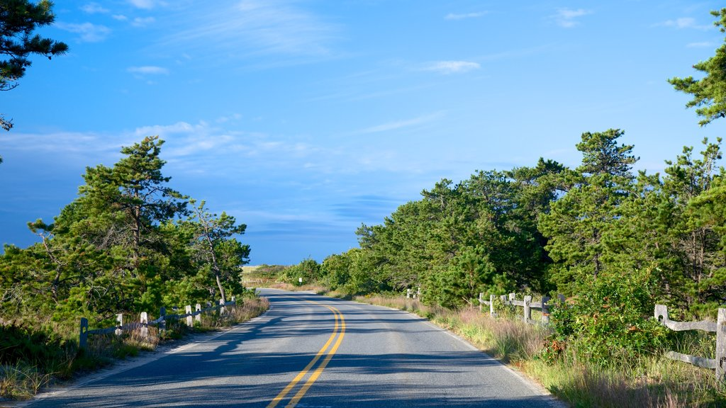 Cape Cod National Seashore featuring tranquil scenes