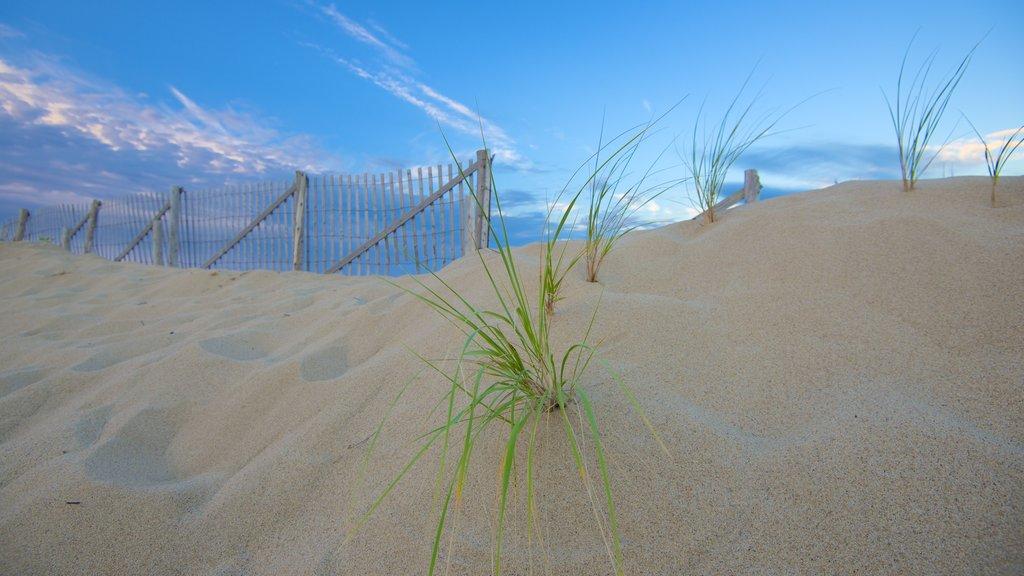 Herring Cove Beach which includes a beach
