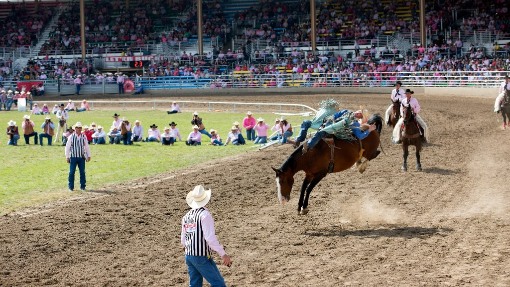 Pendleton featuring a sporting event and land animals as well as a large group of people