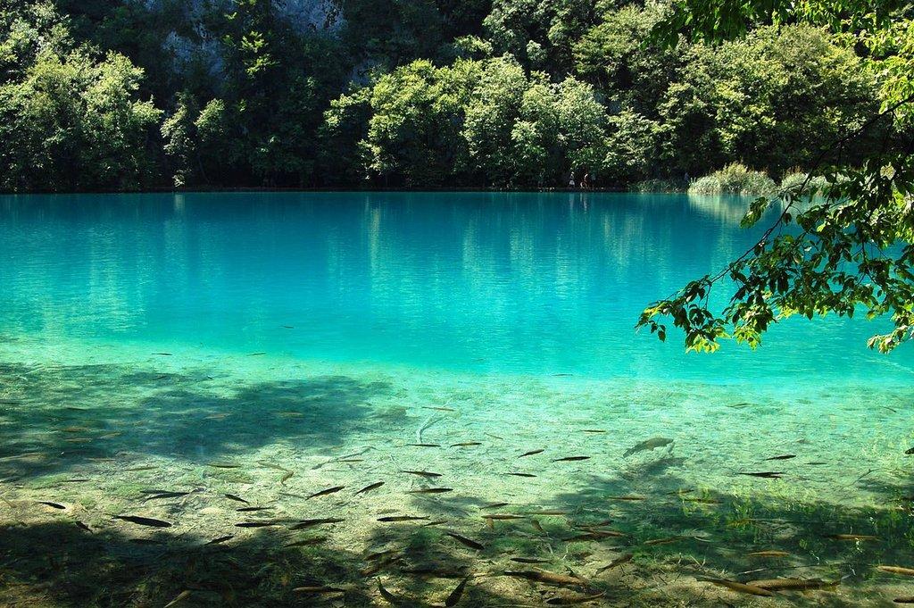 Croatie lac Plitvice  Ferco20 CC BY SA 3.0.jpg