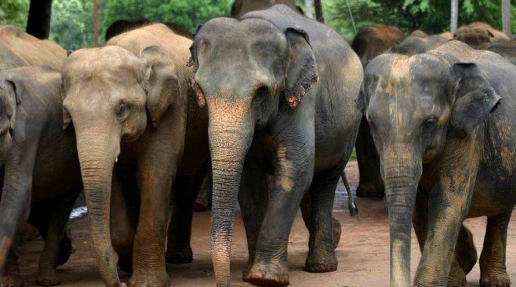 Eléphants du Sri Lanka - Sport Et Nature.jpg