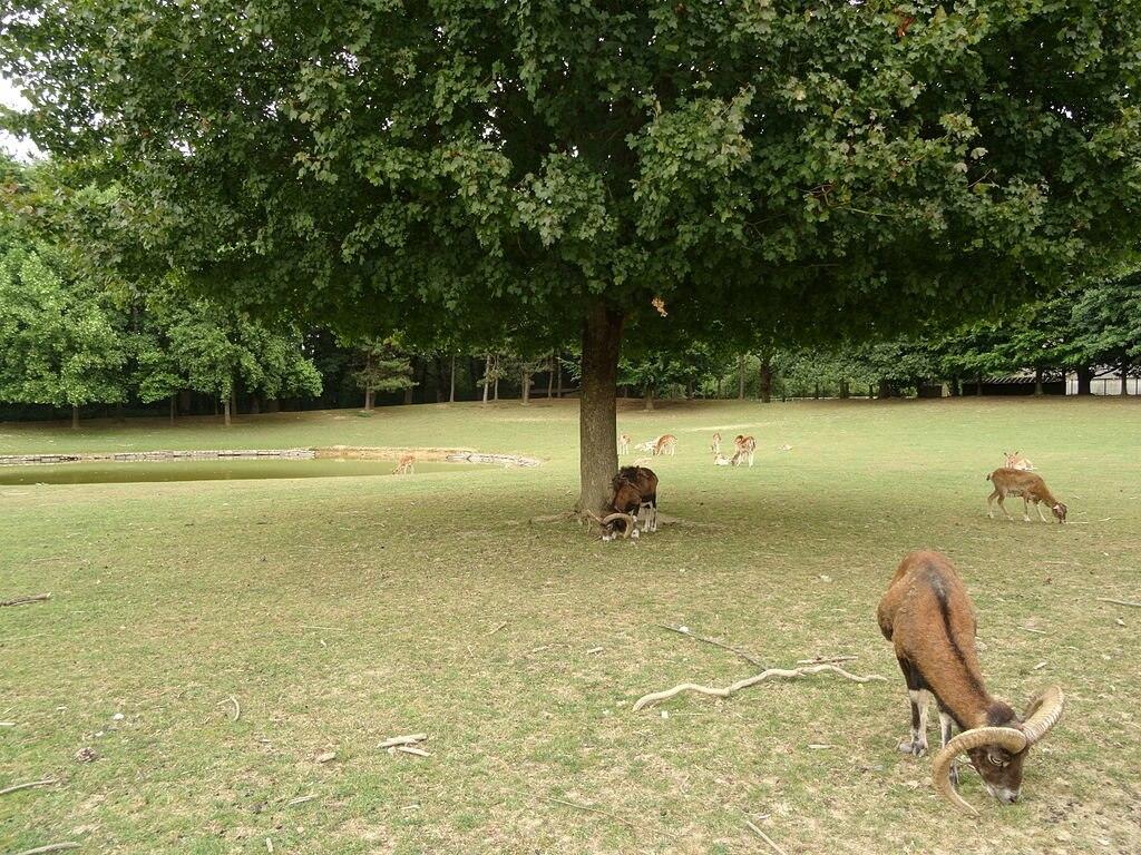 Rennes Parc des Gayeulles Lektz CC BY SA 4.0.JPG