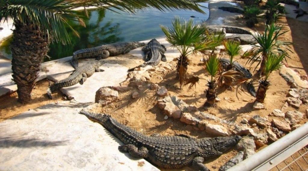 La ferme aux crocodiles.jpg