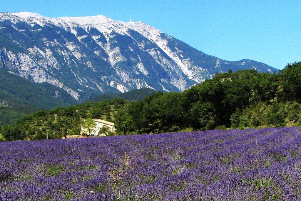 Provence lavande Robert Brink CC BY-SA 2.5.jpg