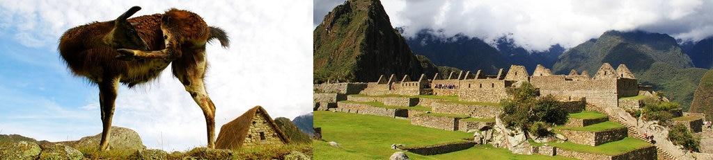 Machu Picchu66.docx.jpg