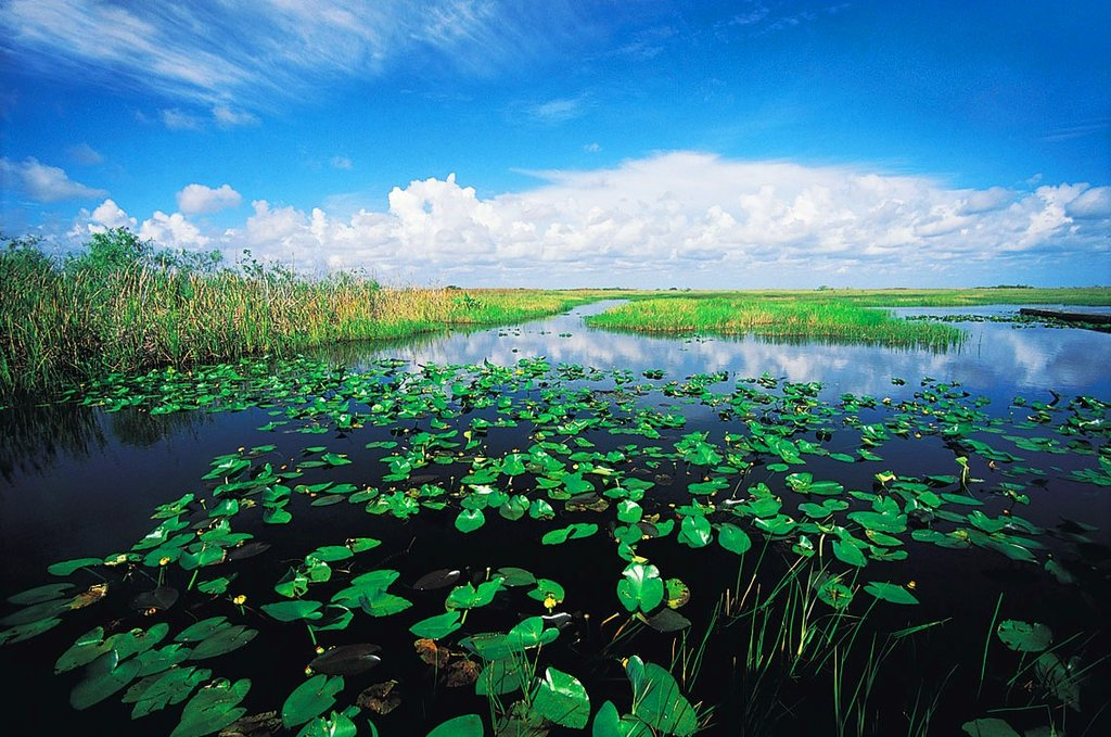 Everglades Getty Images.jpg
