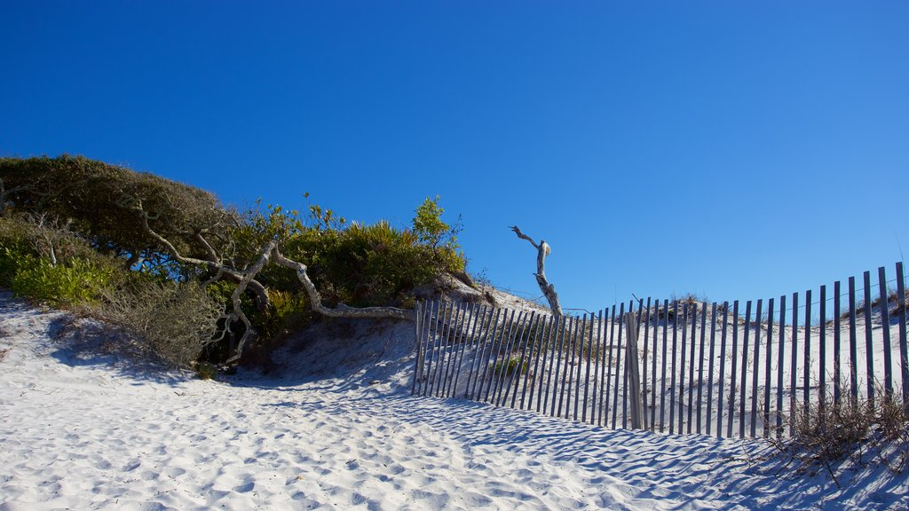 Grayton Beach State Park featuring tranquil scenes