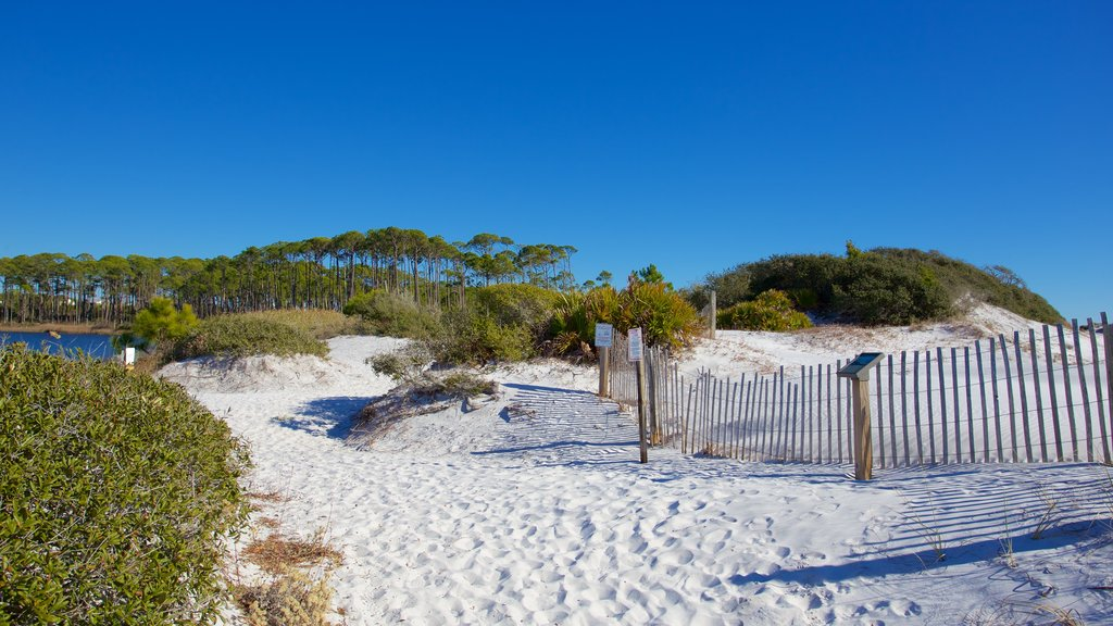 Grayton Beach State Park showing a beach