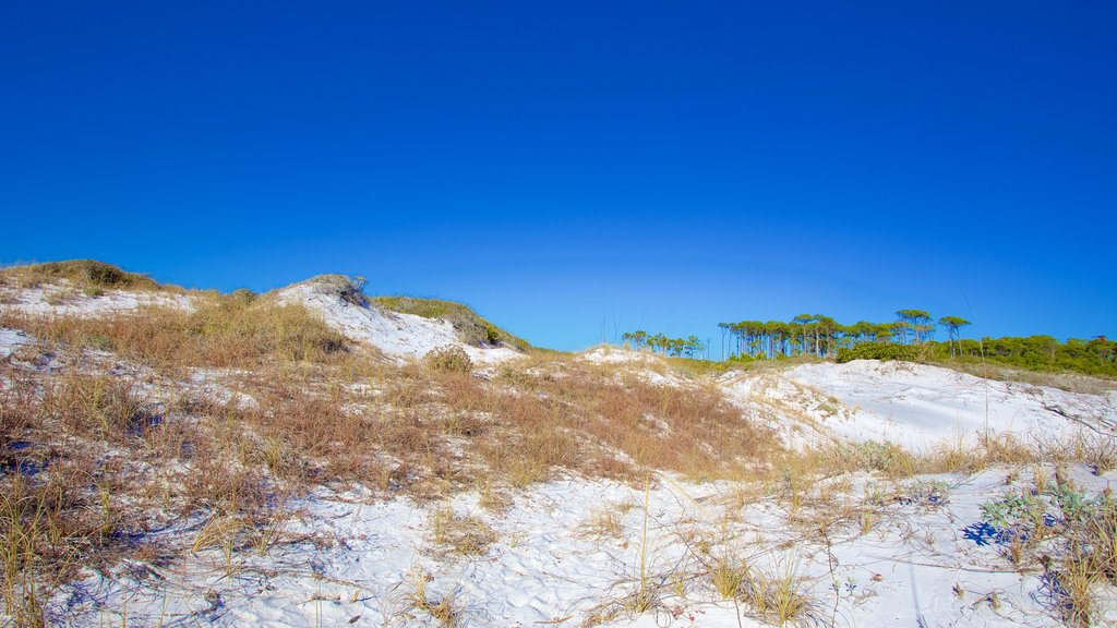 Grayton Beach State Park showing tranquil scenes