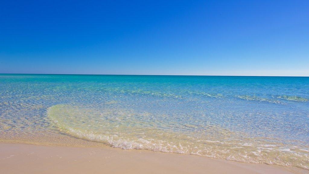 Grayton Beach State Park featuring a sandy beach