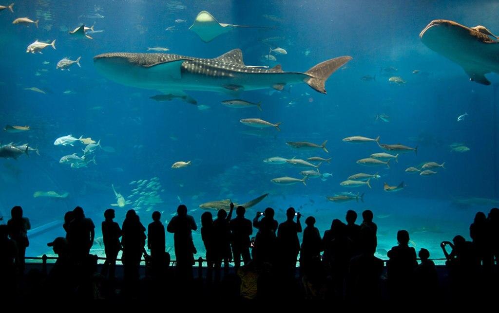 aquarium-EDAM.jpg