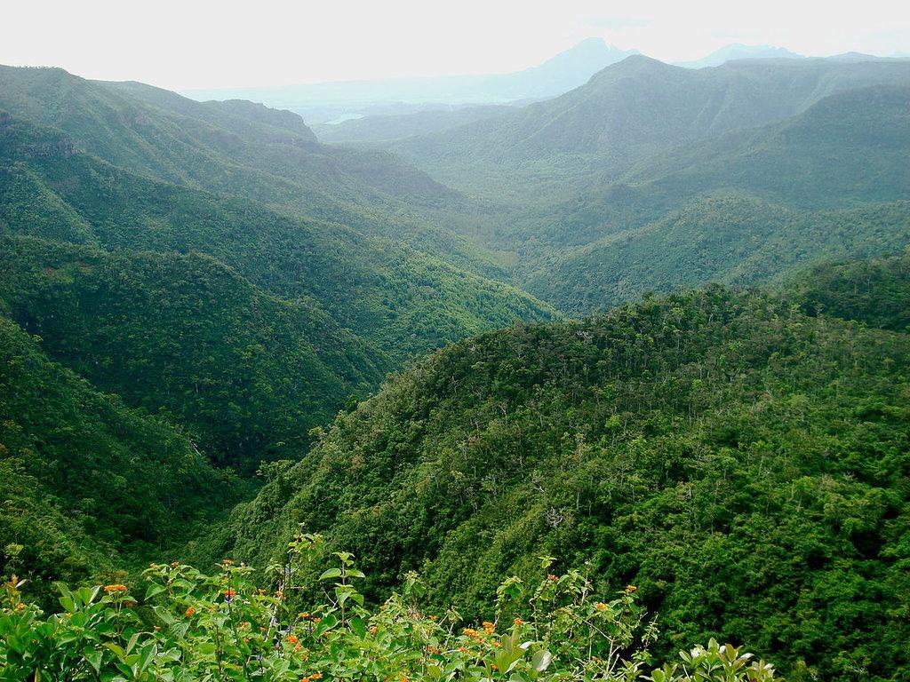 1200px-Black_River_Gorges_National_Park,_Mauritius.jpg