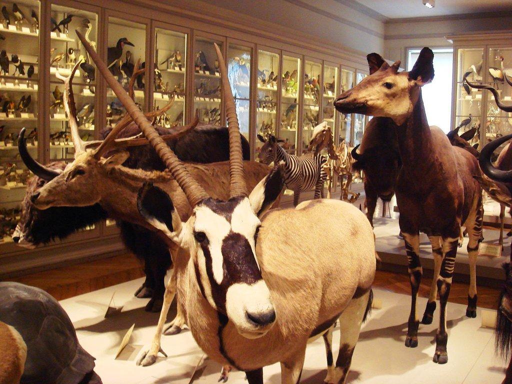 Museum_Histoire_Naturelle PHGCOM CC BY-SA 3.0.jpg