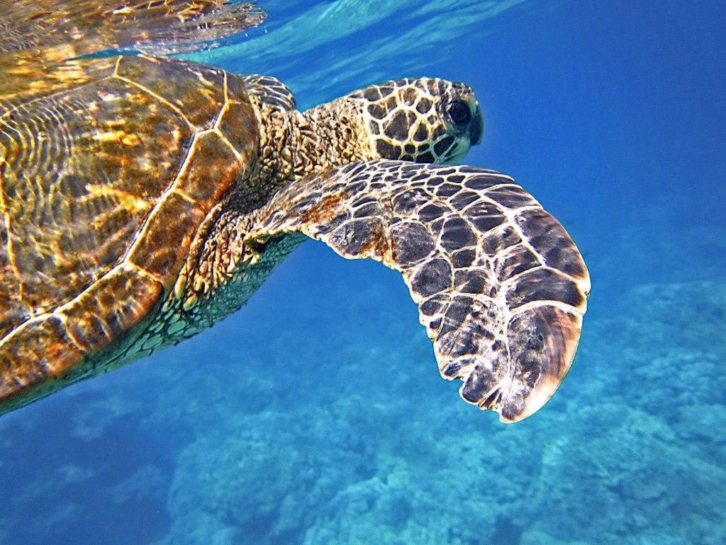 tortue de mer seychelles DP.jpg
