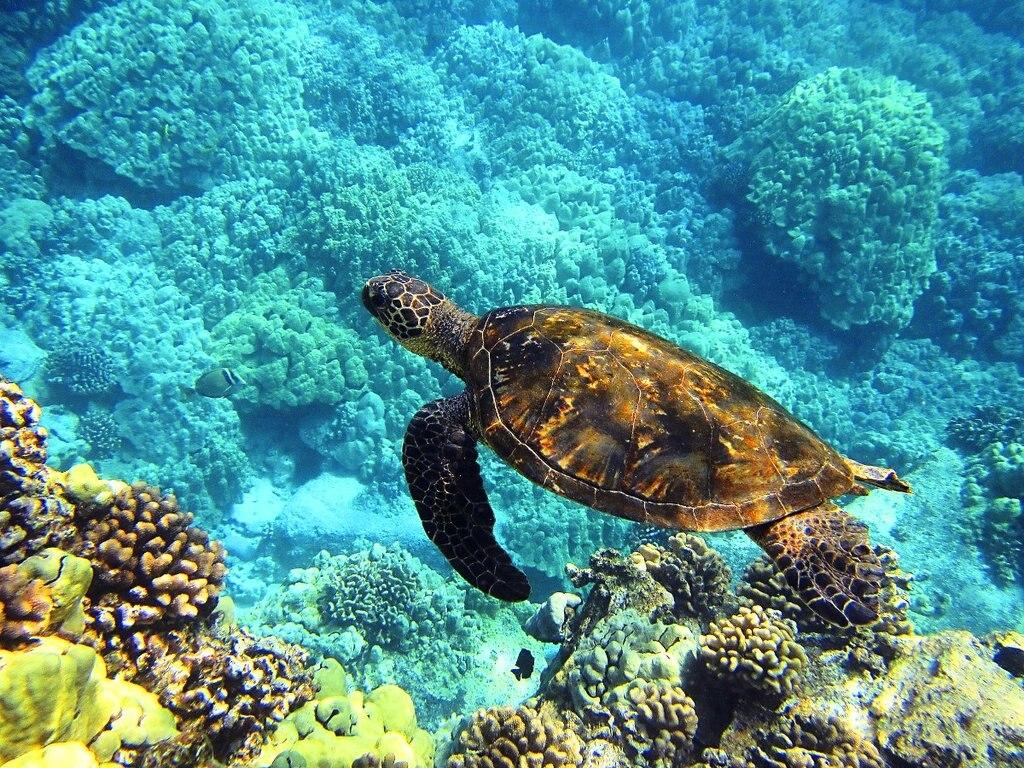 sea-turtle DP.jpg