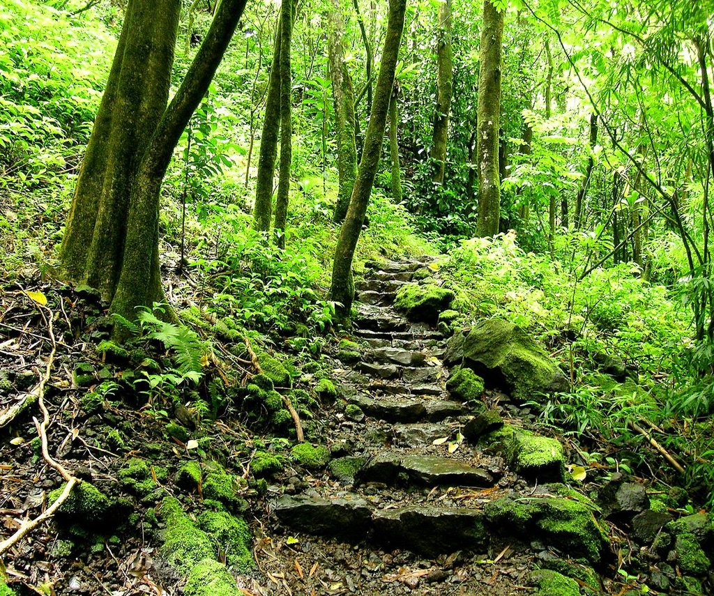 Waimoku_Falls_trail,_Maui Angela Sevin CC BY 2.0.jpg