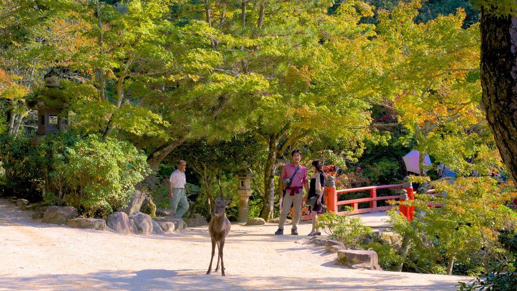 Momijidani Park showing a garden and cuddly or friendly animals as well as a small group of people
