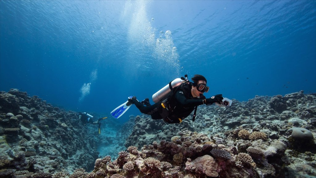 Niue featuring coral and diving as well as an individual male