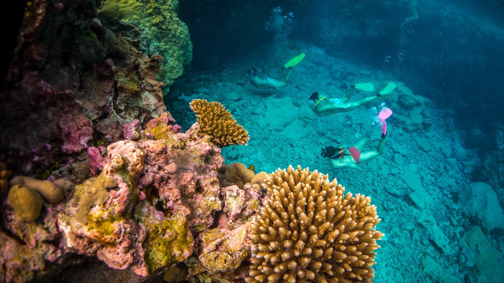 Niue which includes snorkeling and coral as well as a small group of people