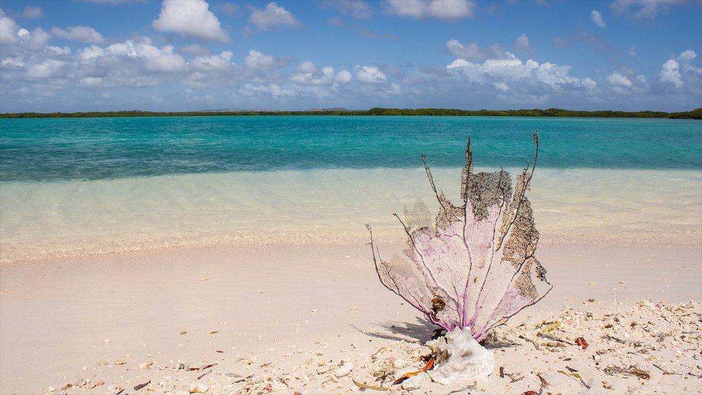 Bonaire ofreciendo una playa