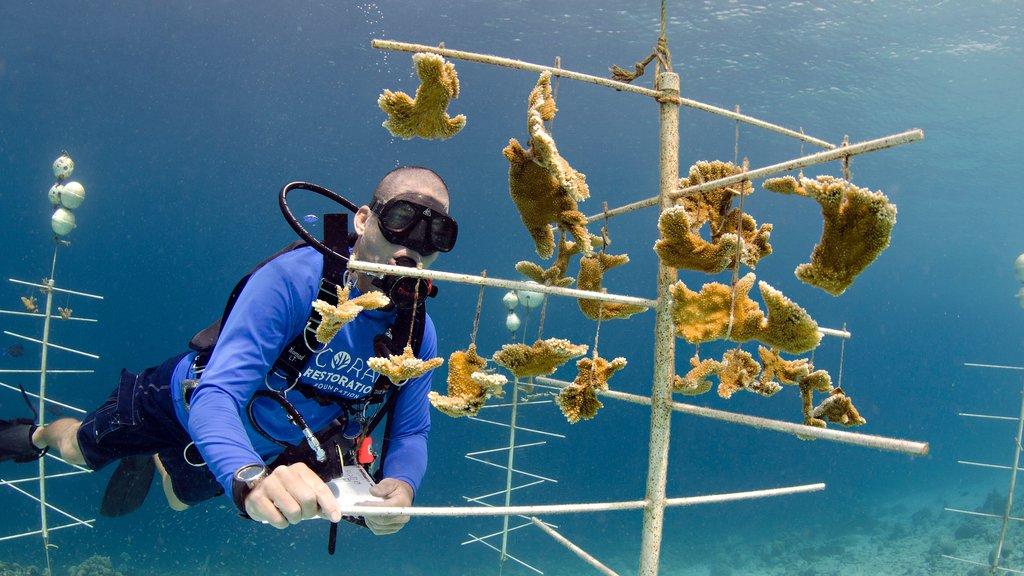 Bonaire que incluye buceo y también un hombre