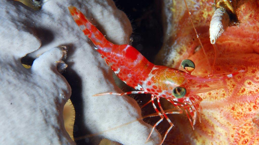 Bonaire que incluye vida marina