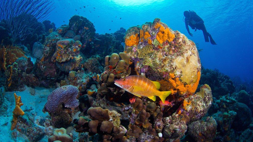 Bonaire que incluye coral, vida marina y zambullida