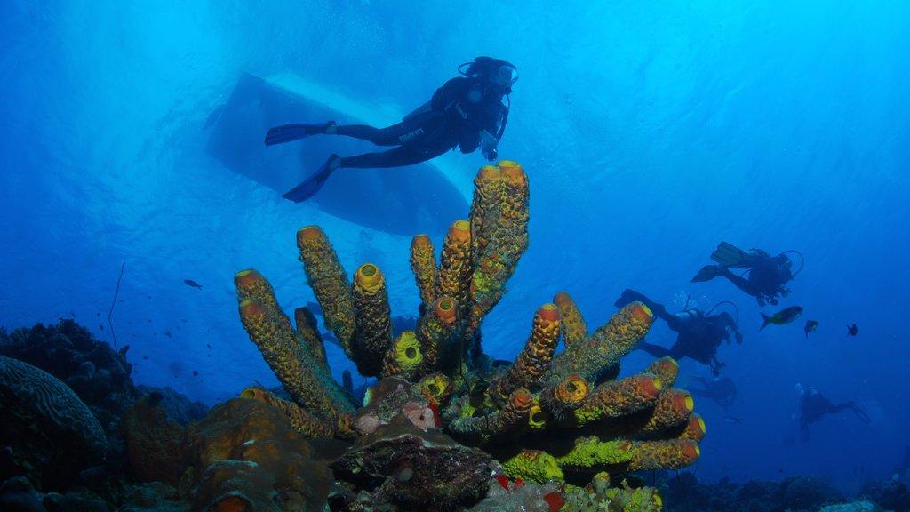 Bonaire ofreciendo buceo y arrecifes coloridos