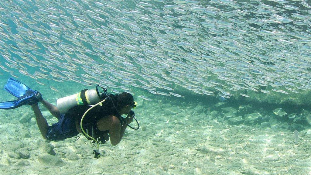 Bonaire que incluye vida marina y buceo y también un hombre