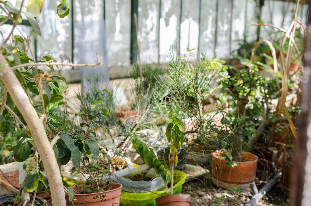 Top 5 Des Jardins A Lisbonne A Decouvrir Explore Par Expedia