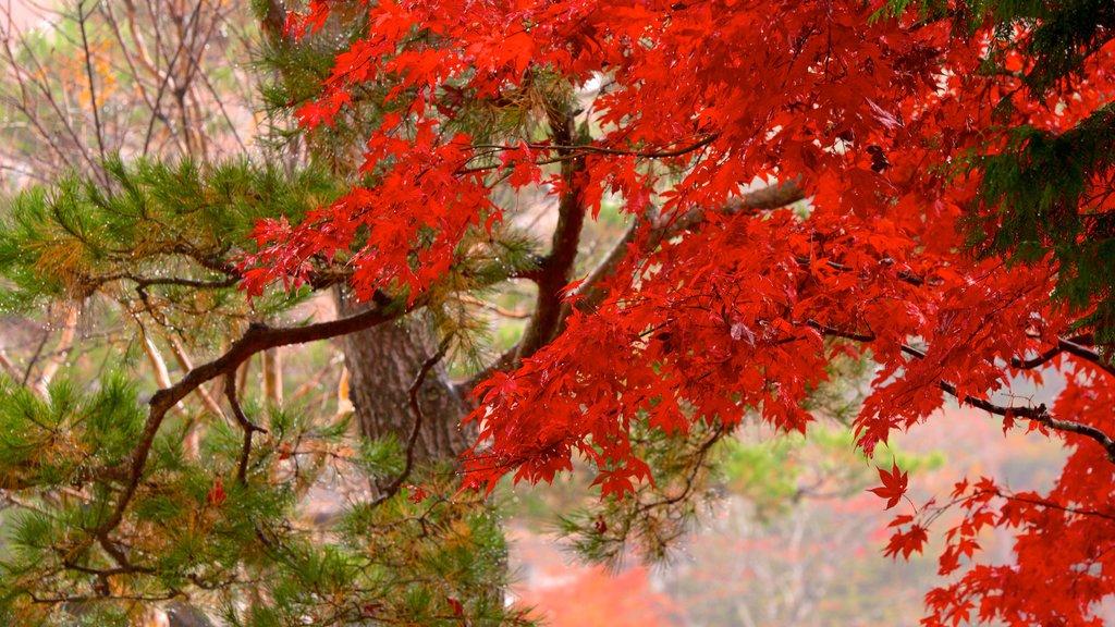 Hida Minzoku Mura Folk Village which includes autumn leaves