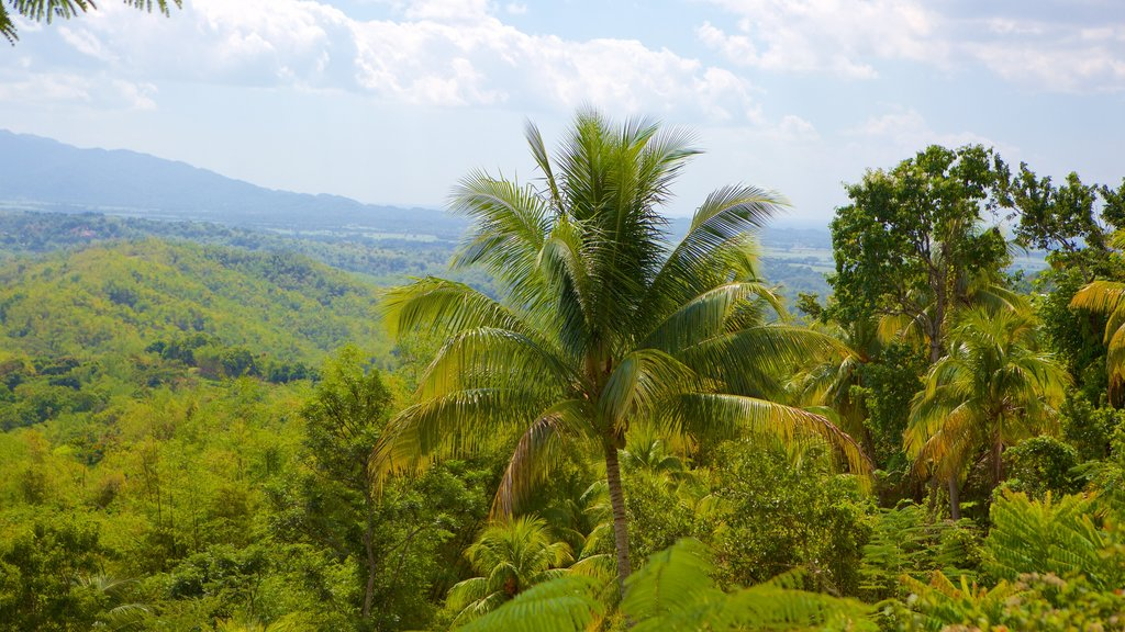 Lucea which includes tropical scenes and forest scenes
