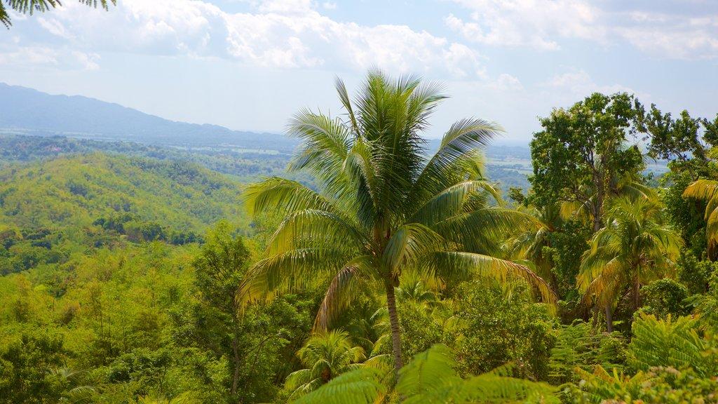Lucea que incluye escenas tropicales y bosques
