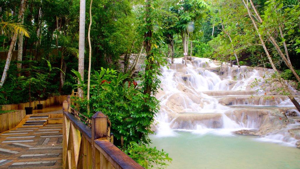 Dunn\'s River Falls featuring a bridge, a cascade and rainforest