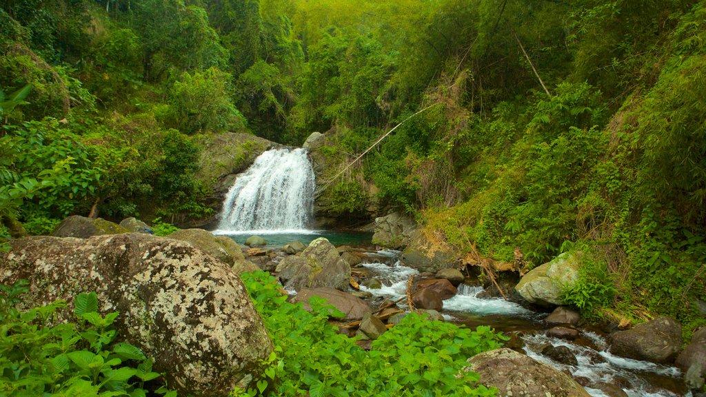 Blue Mountains National Park featuring rainforest and a cascade