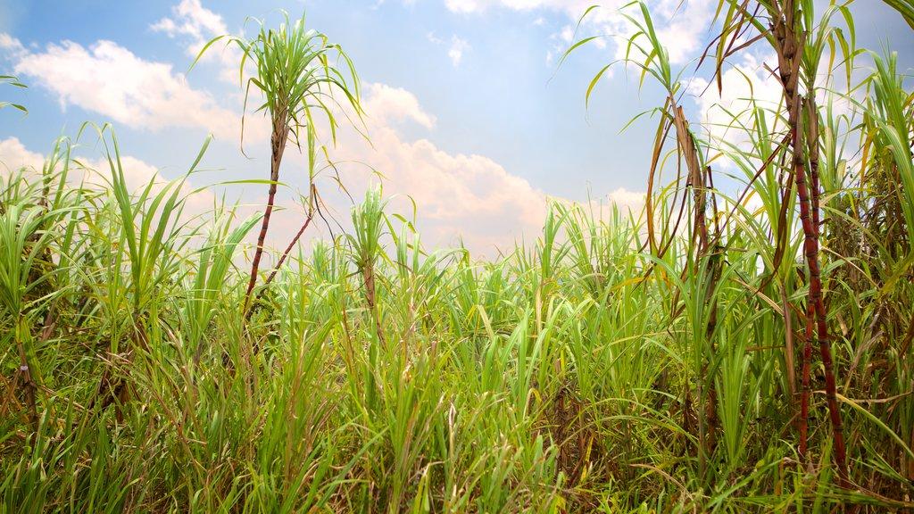 Lucea que incluye tierras de cultivo
