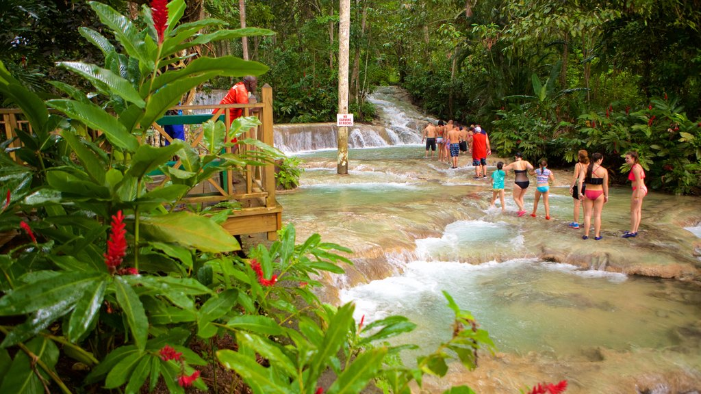 Dunn\'s River Falls showing rainforest, views and rapids