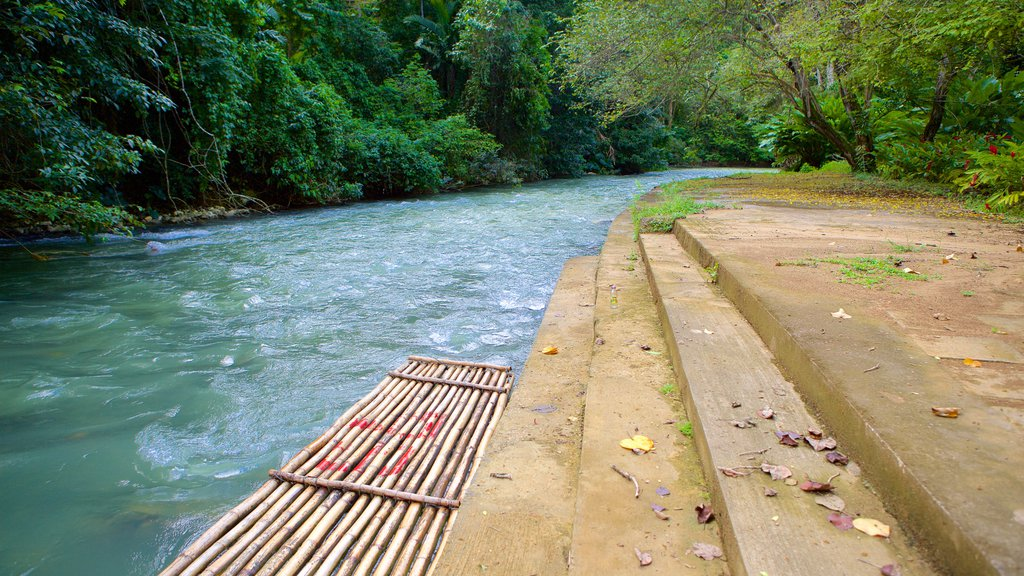 Montego Bay which includes rainforest, a river or creek and tropical scenes