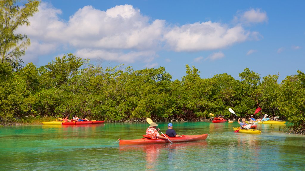 Lucayan National Park featuring a lake or waterhole, mangroves and kayaking or canoeing