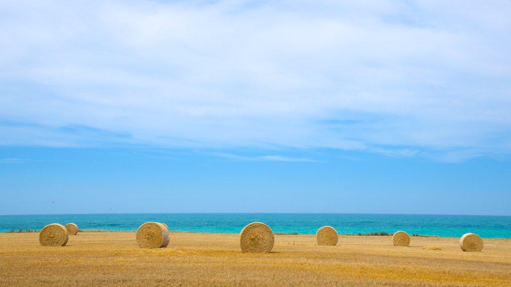 Christchurch que incluye tierras de cultivo