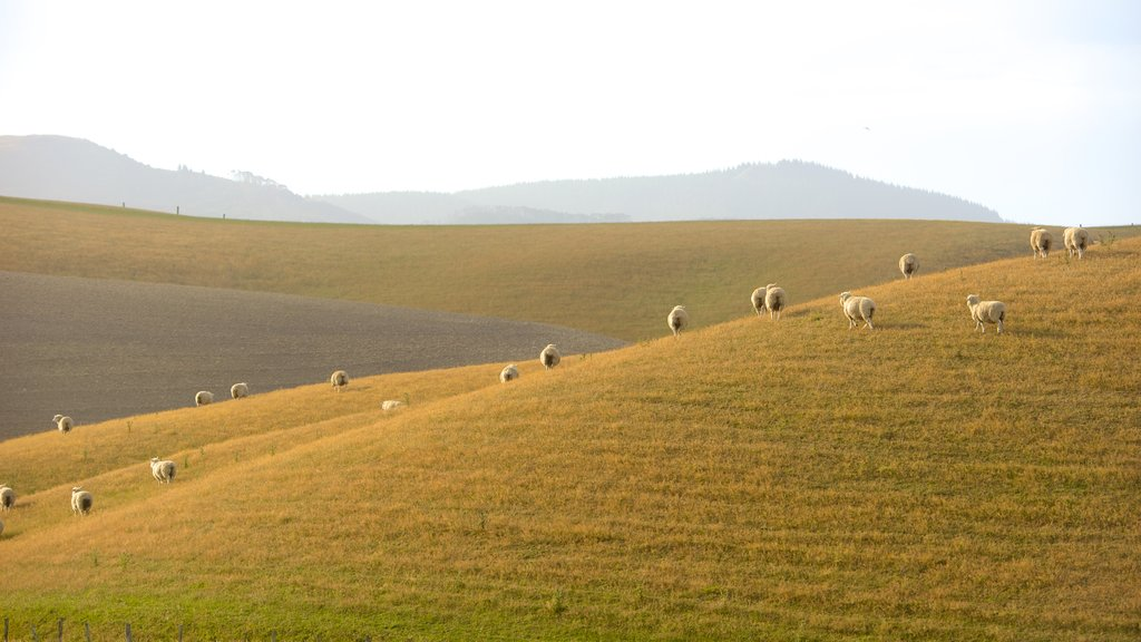Christchurch mostrando animales tiernos y tierras de cultivo
